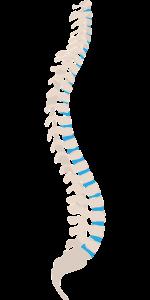 spine-1925870_1280-min